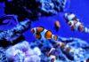 Jak wybrać dekoracje do akwarium